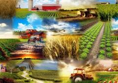 In agriculture, Bulgaria  excels Greece only in cereal production